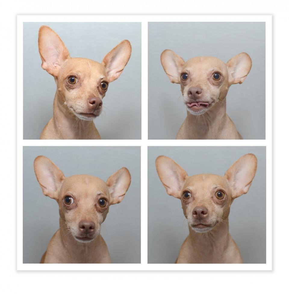 dog-1033161_1920-960x976.jpg