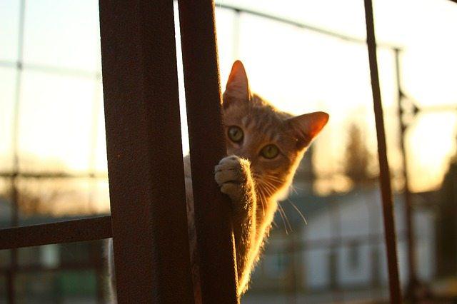cat-1040815_640.jpg